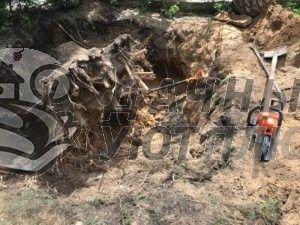 спил деревьев в Москве и области