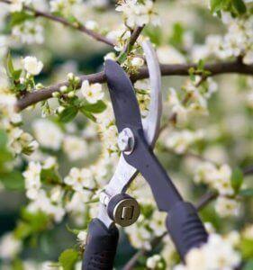 Подрезка деревьев весной