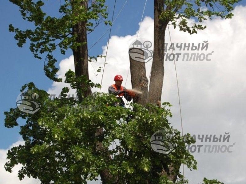 Спил дерева арбористом в Московской области