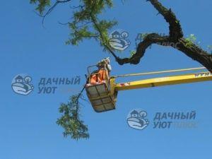 Спил дерева с использованием подъемника