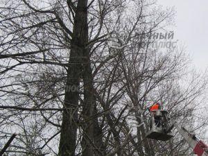 Спил веток деревьев, угрожающих ЛЭП