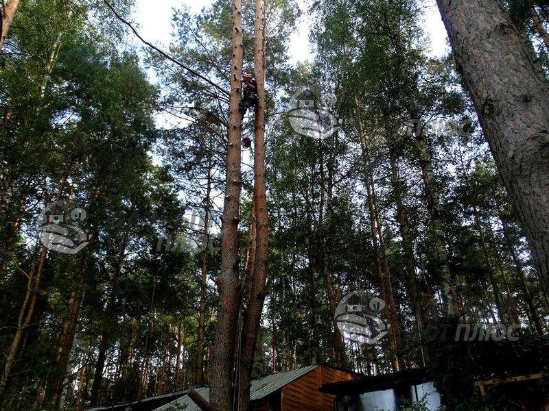 Спил деревьев арбористами на базе отдыха Егорьевск