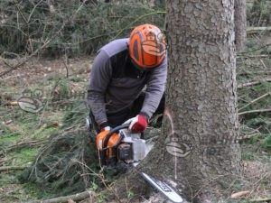 Удаление дерева на участке бензопилой