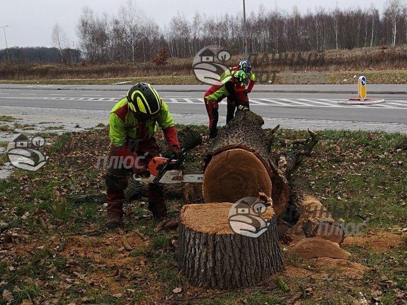 Фрезерование ствола аварийного дерева