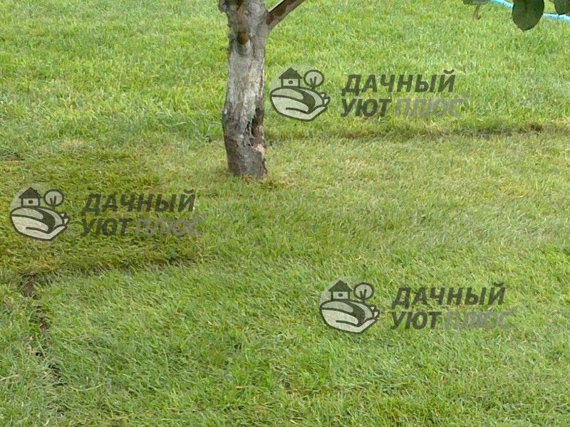 Отремонтированный рулонный газон