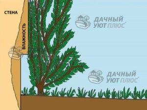 Рис.9 - Густые кустарники, высаженные рядом с домом, не защищают фасад от влаги, а иногда и сами могут ее вызвать